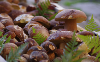 cuisine-perigord-cepes-Dordogne