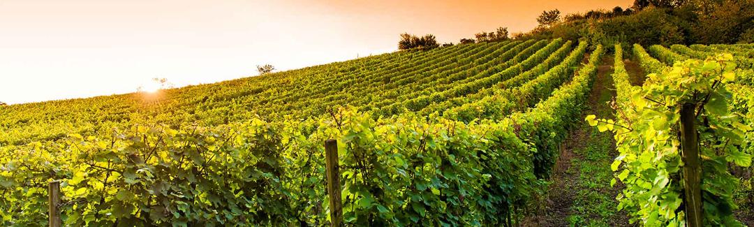 vin-bergerac-cuisine-perigord-Dordogne